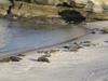 Seal_beach