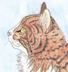 Small_red_tabby_5