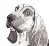 Sad_hound